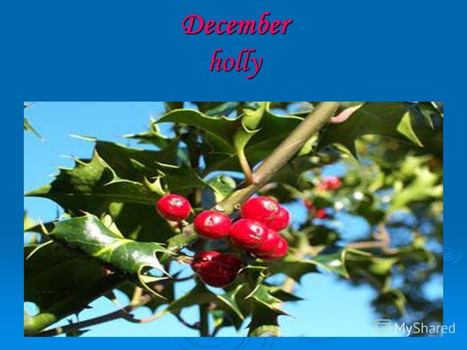 December holly
