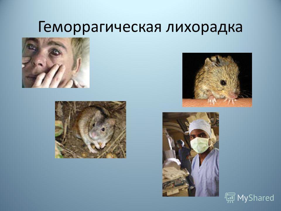 Геморрагическая лихорадка