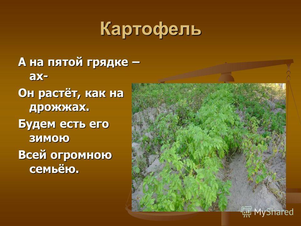 Огурцы На четвёртой грядке Овощ, что играет в прятки. Под листами прячется, Чтобы не маячиться. Тот зелёный молодец Носит имя огурец.