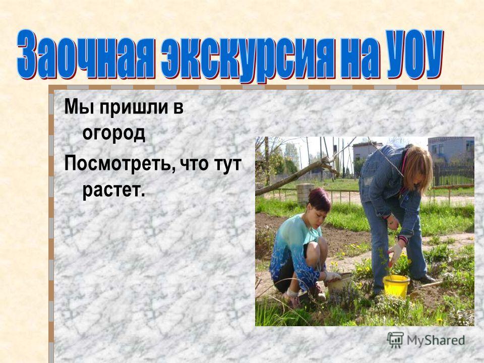Подготовка УОУ осенняя обработка почвы весенняя обработка почвы внесение удобрений нарезка гряд Приготовление теплиц