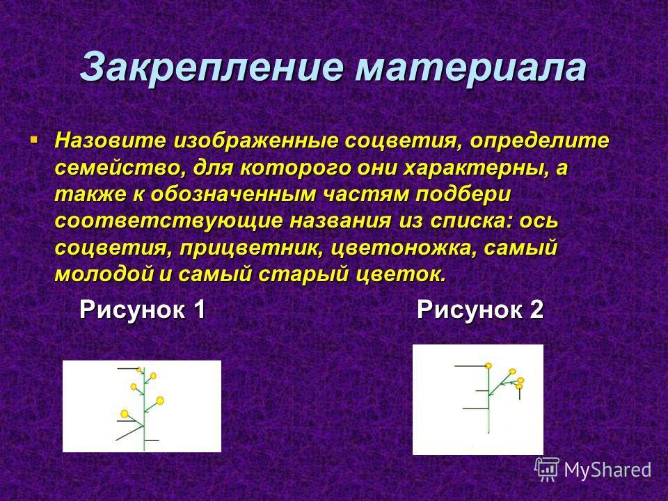 Закрепление материала Назовите изображенные соцветия, определите семейство, для которого они характерны, а также к обозначенным частям подбери соответствующие названия из списка: ось соцветия, прицветник, цветоножка, самый молодой и самый старый цве