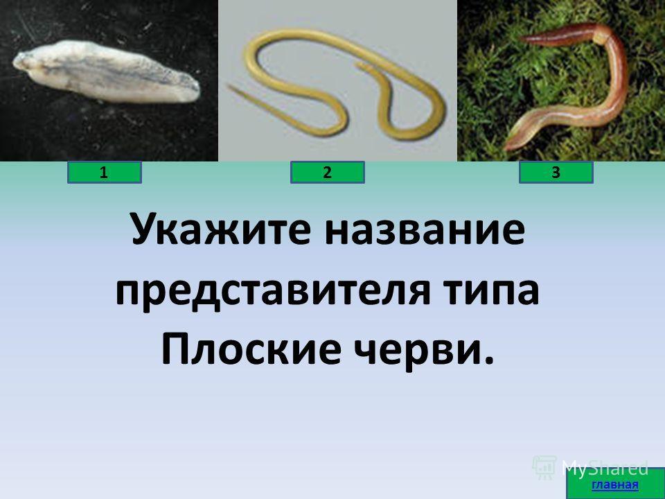 Укажите название представителя типа Плоские черви. 123 главная