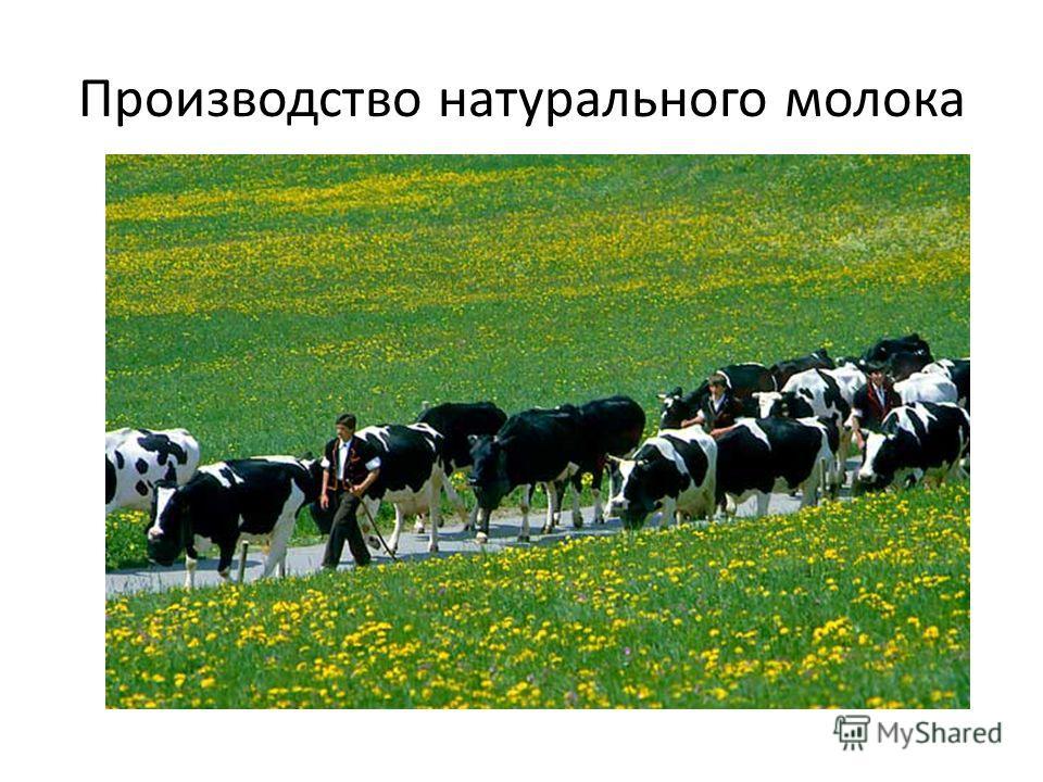 Производство натурального молока