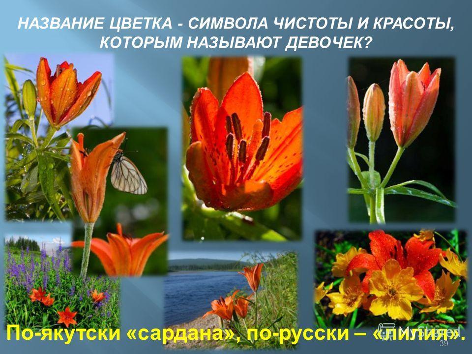 НАЗВАНИЕ ЦВЕТКА - СИМВОЛА ЧИСТОТЫ И КРАСОТЫ, КОТОРЫМ НАЗЫВАЮТ ДЕВОЧЕК? По-якутски «сардана», по-русски – «лилия». 39