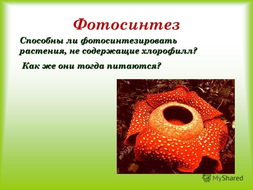 Фотосинтез Способны ли фотосинтезировать растения, не содержащие хлорофилл? Как же они тогда питаются? Как же они тогда питаются?