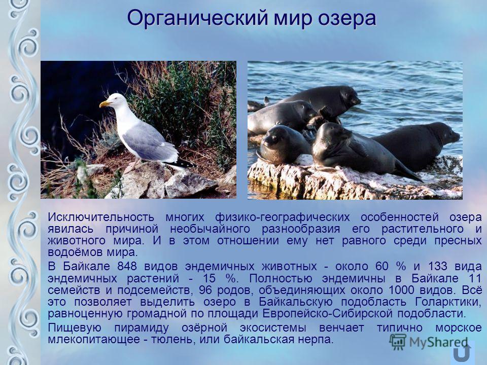 Органический мир озера Исключительность многих физико-географических особенностей озера явилась причиной необычайного разнообразия его растительного и животного мира. И в этом отношении ему нет равного среди пресных водоёмов мира. В Байкале 848 видов
