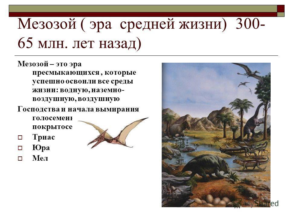 Мезозой ( эра средней жизни) 300- 65 млн. лет назад) Мезозой – это эра пресмыкающихся, которые успешно освоили все среды жизни: водную, наземно- воздушную, воздушную Господства и начала вымирания голосеменных и появление покрытосеменных Триас Юра Мел