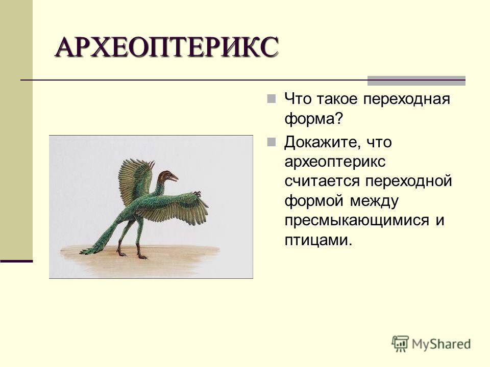 АРХЕОПТЕРИКС Что такое переходная форма? Что такое переходная форма? Докажите, что археоптерикс считается переходной формой между пресмыкающимися и птицами. Докажите, что археоптерикс считается переходной формой между пресмыкающимися и птицами.