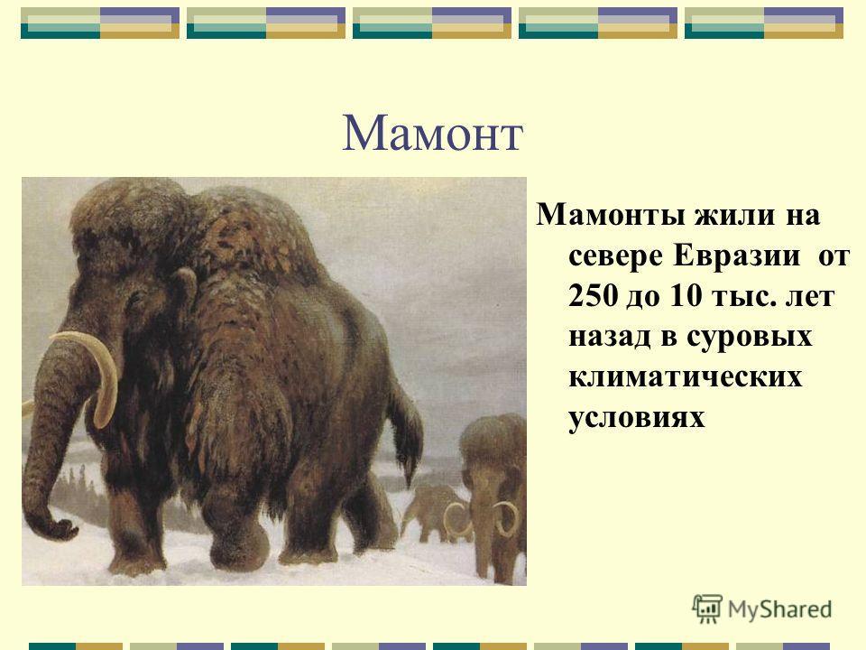 Мамонт Мамонты жили на севере Евразии от 250 до 10 тыс. лет назад в суровых климатических условиях