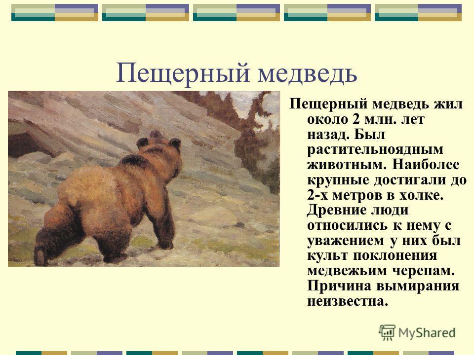 Пещерный медведь Пещерный медведь жил около 2 млн. лет назад. Был растительноядным животным. Наиболее крупные достигали до 2-х метров в холке. Древние люди относились к нему с уважением у них был культ поклонения медвежьим черепам. Причина вымирания