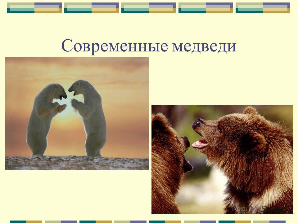 Современные медведи
