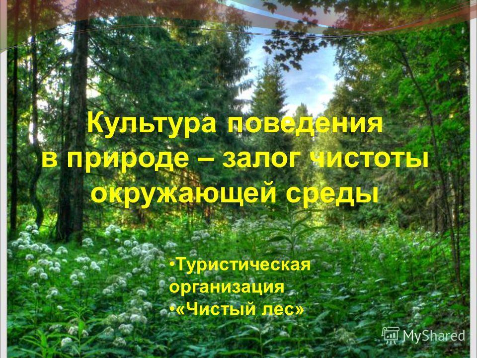 Культура поведения в природе – залог чистоты окружающей среды Туристическая организация «Чистый лес»