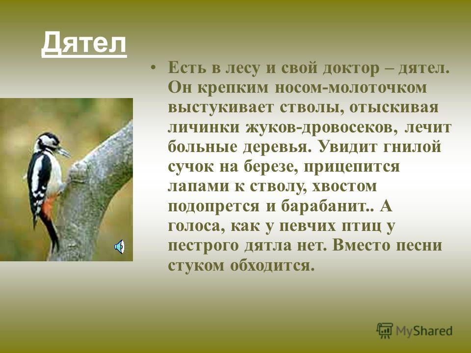 КУЛИК-СОРОКА ( ЗОНДИРУЕТ )