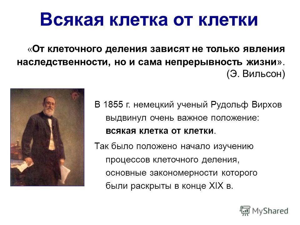 Всякая клетка от клетки В 1855 г. немецкий ученый Рудольф Вирхов выдвинул очень важное положение: всякая клетка от клетки. Так было положено начало изучению процессов клеточного деления, основные закономерности которого были раскрыты в конце XIX в. «
