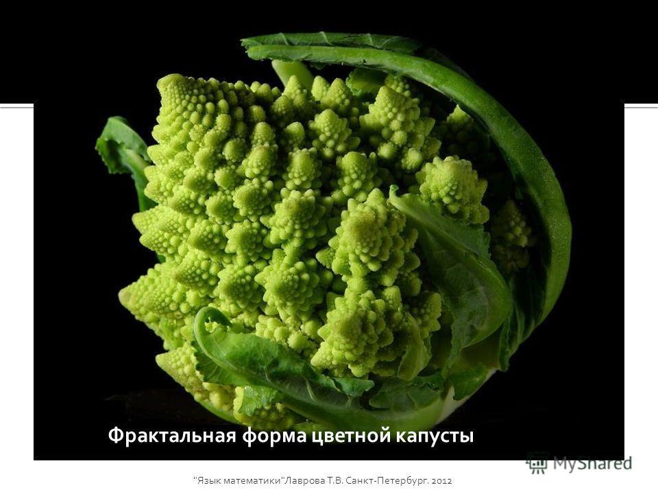 Фрактальная форма цветной капусты Язык математикиЛаврова Т.В. Санкт-Петербург. 2012