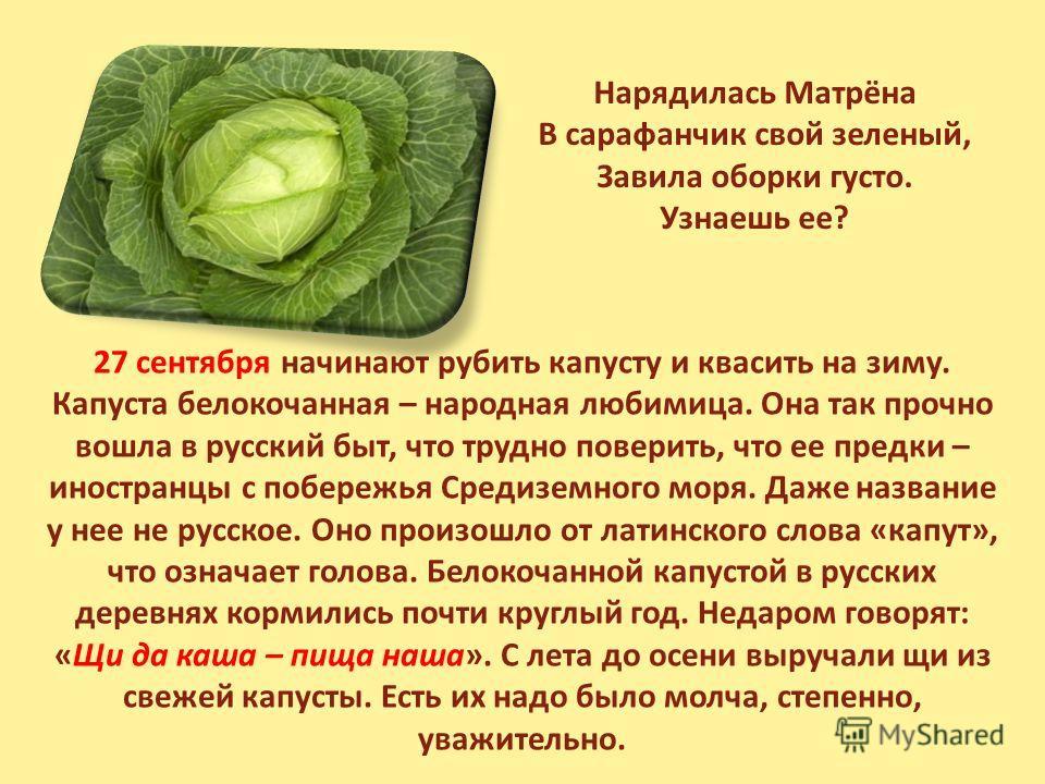 Нарядилась Матрёна В сарафанчик свой зеленый, Завила оборки густо. Узнаешь ее? 27 сентября начинают рубить капусту и квасить на зиму. Капуста белокочанная – народная любимица. Она так прочно вошла в русский быт, что трудно поверить, что ее предки – и
