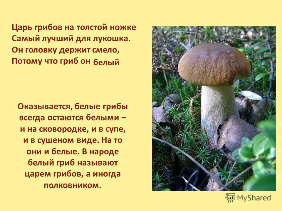 Царь грибов на толстой ножке Самый лучший для лукошка. Он головку держит смело, Потому что гриб он белый Оказывается, белые грибы всегда остаются белыми – и на сковородке, и в супе, и в сушеном виде. На то они и белые. В народе белый гриб называют ца