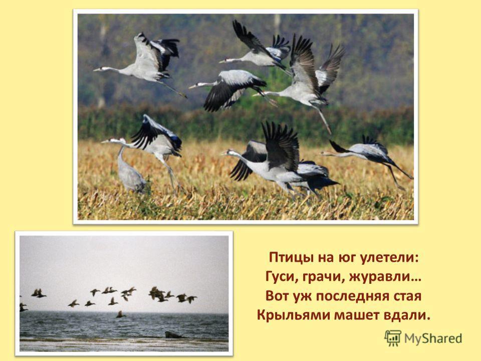 Птицы на юг улетели: Гуси, грачи, журавли… Вот уж последняя стая Крыльями машет вдали.
