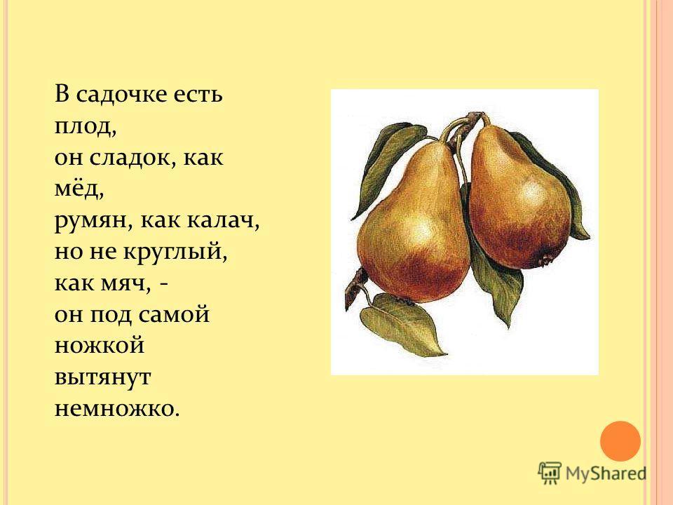 В садочке есть плод, он сладок, как мёд, румян, как калач, но не круглый, как мяч, - он под самой ножкой вытянут немножко.