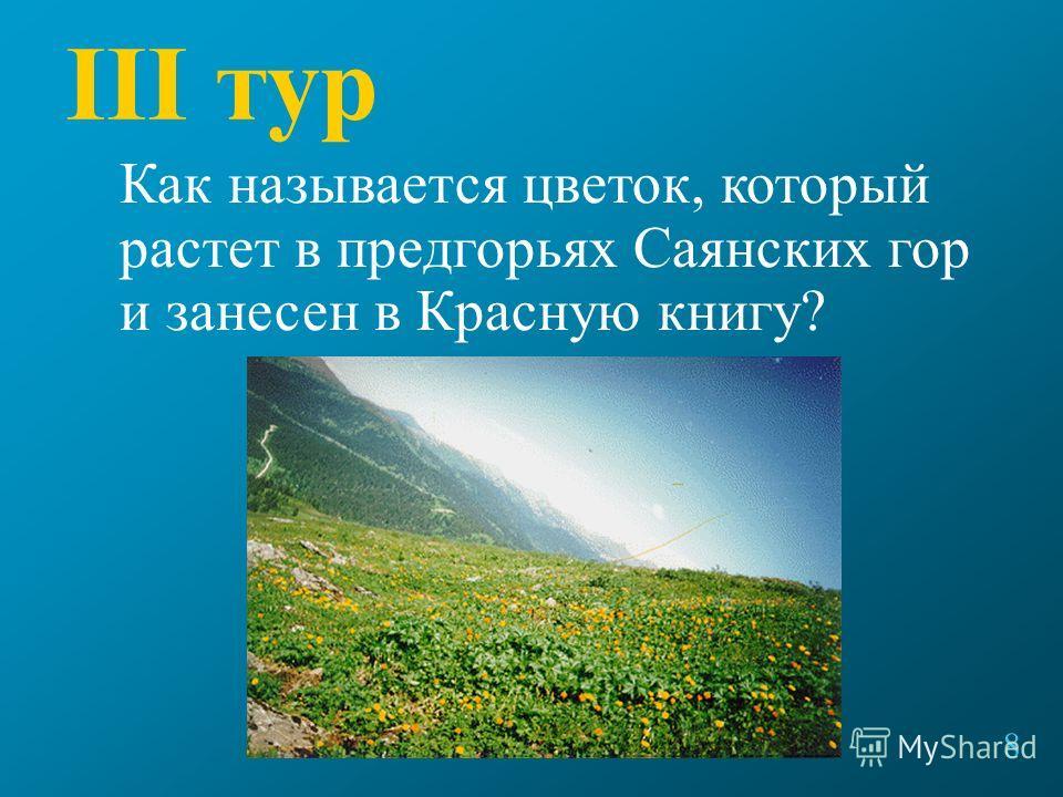III тур Как называется цветок, который растет в предгорьях Саянских гор и занесен в Красную книгу? 8