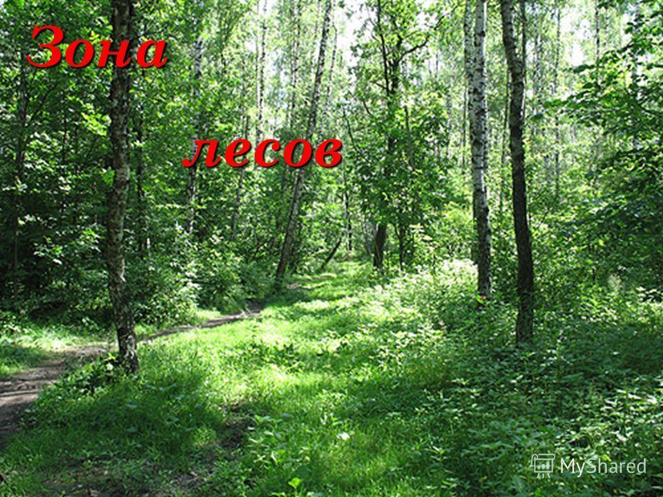 Зона лесов лесов