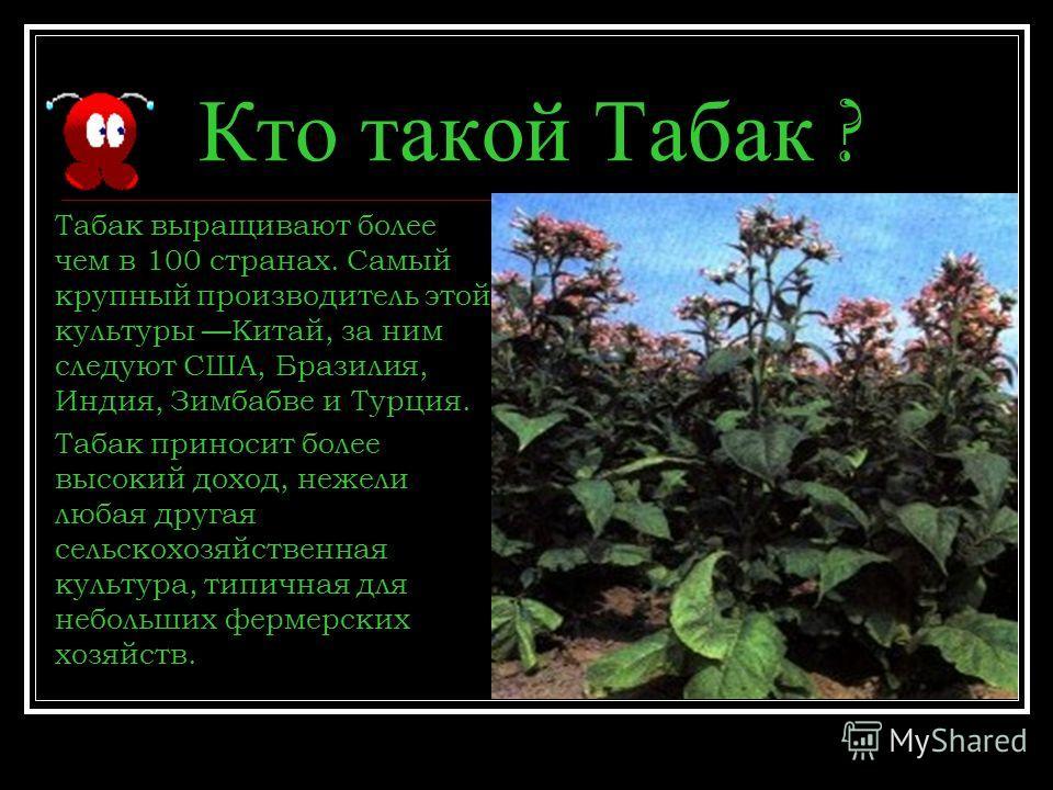 Кто такой Табак ? Табак выращивают более чем в 100 странах. Самый крупный производитель этой культуры Китай, за ним следуют США, Бразилия, Индия, Зимбабве и Турция. Табак приносит более высокий доход, нежели любая другая сельскохозяйственная культура