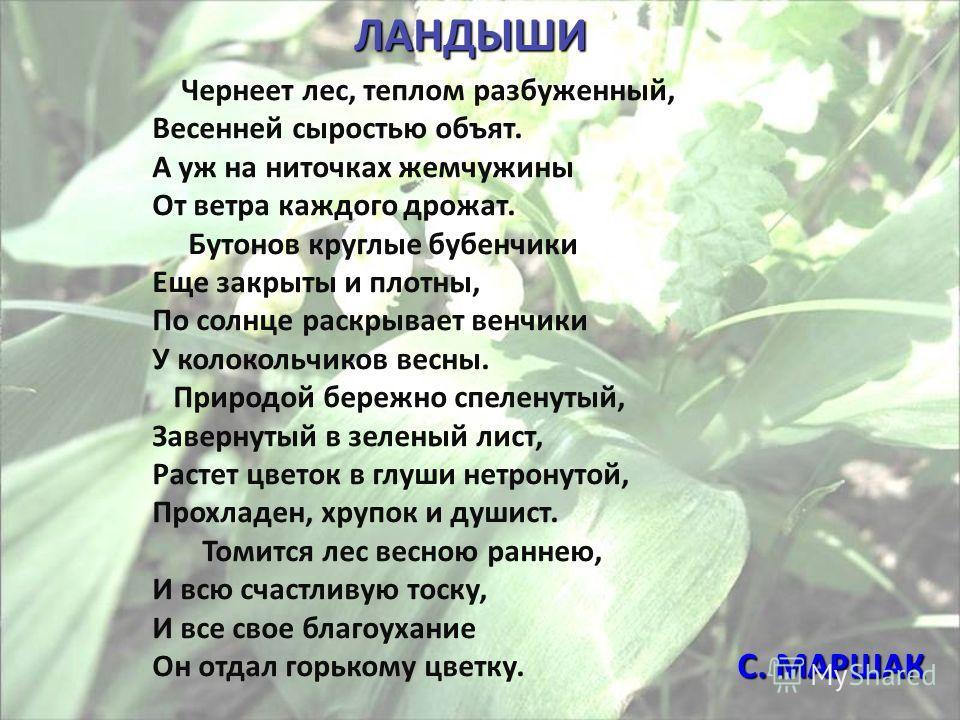 Чернеет лес, теплом разбуженный, Весенней сыростью объят. А уж на ниточках жемчужины От ветра каждого дрожат. Бутонов круглые бубенчики Еще закрыты и плотны, По солнце раскрывает венчики У колокольчиков весны. Природой бережно спеленутый, Завернутый