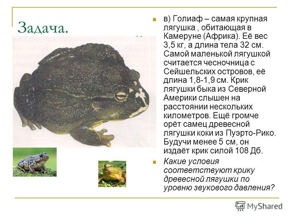 Задача. в) Голиаф – самая крупная лягушка, обитающая в Камеруне (Африка). Её вес 3,5 кг, а длина тела 32 см. Самой маленькой лягушкой считается чесночница с Сейшельских островов, её длина 1,8-1,9 см. Крик лягушки быка из Северной Америки слышен на ра