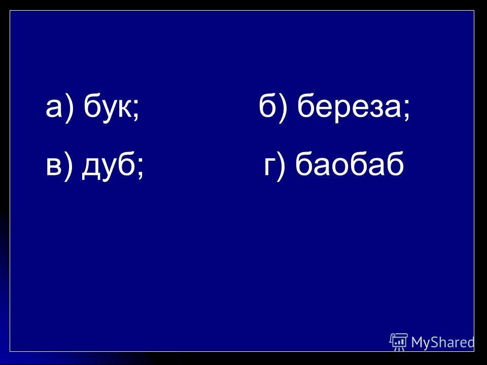 а) бук; б) береза; в) дуб; г) баобаб