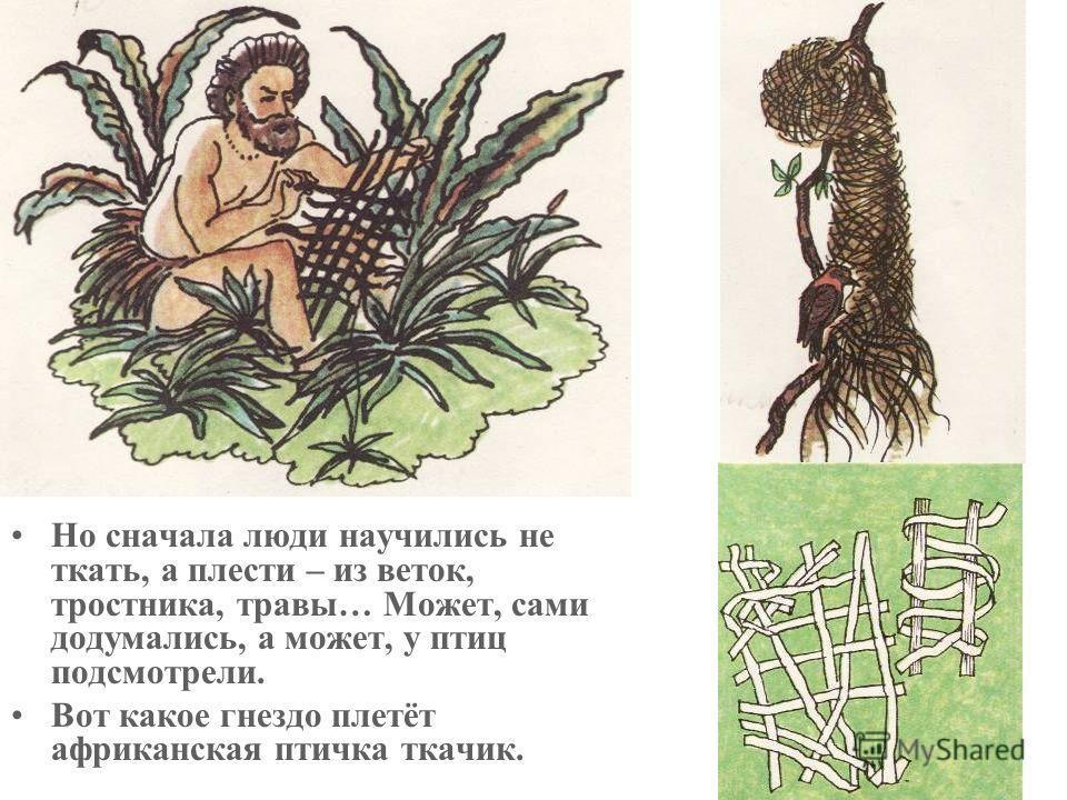 Но сначала люди научились не ткать, а плести – из веток, тростника, травы… Может, сами додумались, а может, у птиц подсмотрели. Вот какое гнездо плетёт африканская птичка ткачик.