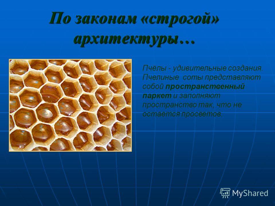Простейшее животное Скелет одноклеточного организма феодарии (Circogonia icosahedra) по форме напоминает икосаэдр. Скелет одноклеточного организма феодарии (Circogonia icosahedra) по форме напоминает икосаэдр. Большинство феодарий живут на морской гл
