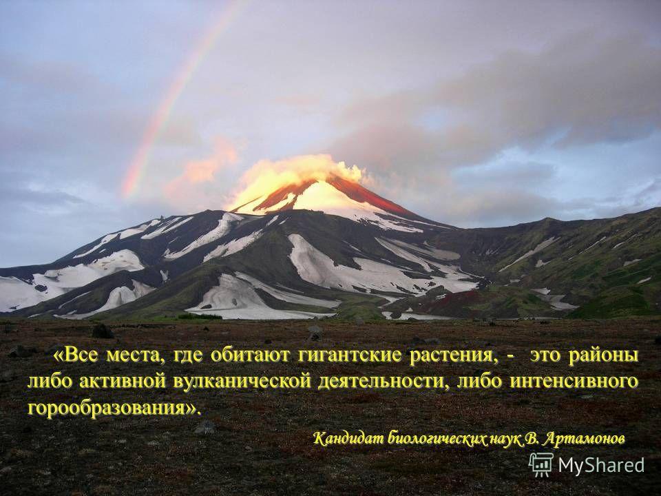 Кандидат биологических наук В. Артамонов «Все места, где обитают гигантские растения, - это районы либо активной вулканической деятельности, либо интенсивного горообразования».
