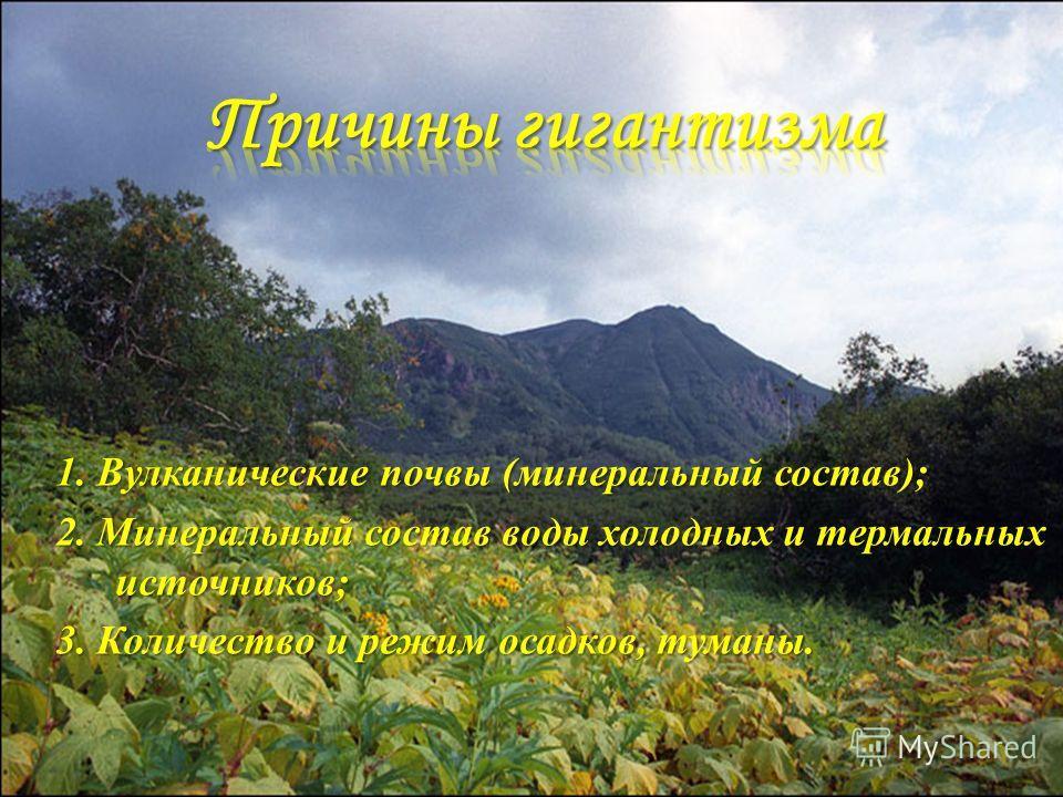 1. Вулканические почвы (минеральный состав); 2. Минеральный состав воды холодных и термальных источников; 3. Количество и режим осадков, туманы.