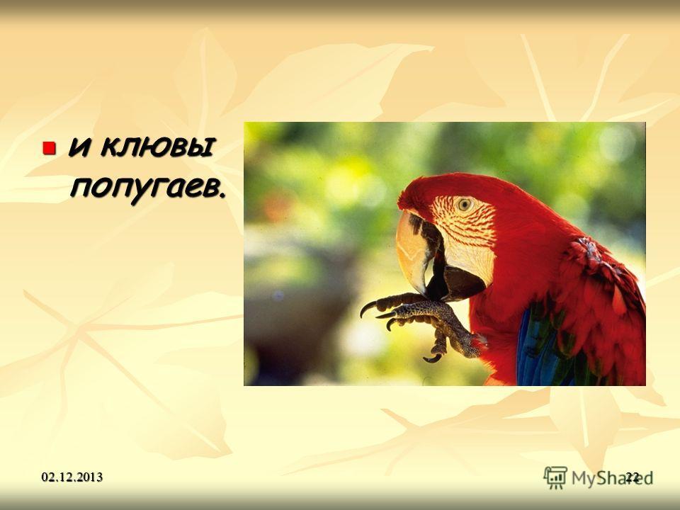 02.12.201322 и клювы попугаев. и клювы попугаев.