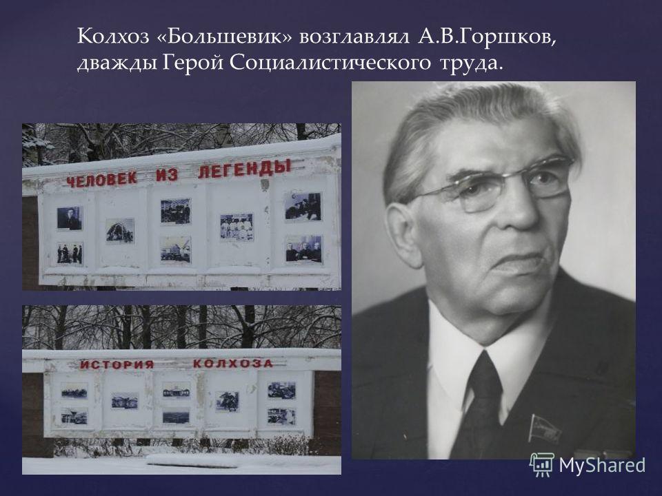 Колхоз «Большевик» возглавлял А.В.Горшков, дважды Герой Социалистического труда.