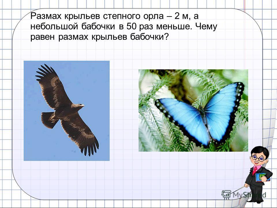 Размах крыльев степного орла – 2 м, а небольшой бабочки в 50 раз меньше. Чему равен размах крыльев бабочки?