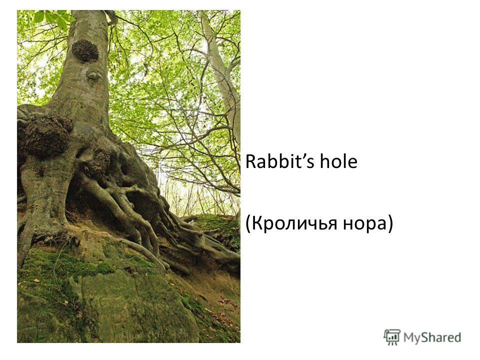 Rabbits hole (Кроличья нора)