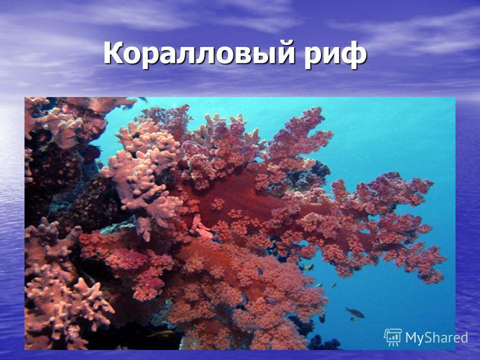 Коралловый риф Коралловый риф