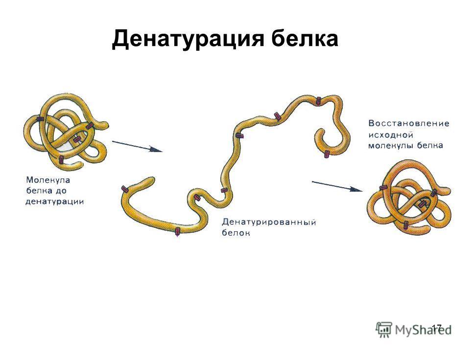 17 Денатурация белка