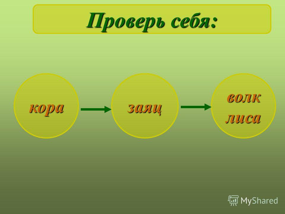 заяц Составь цепь питания: