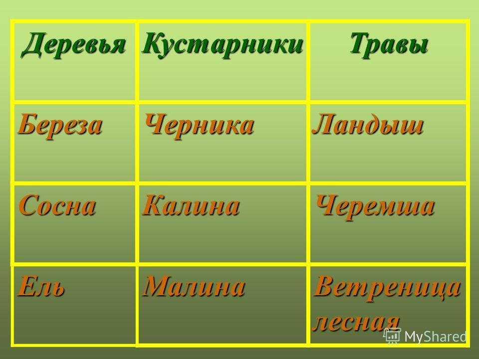 мох лишайник Мхи и лишайники