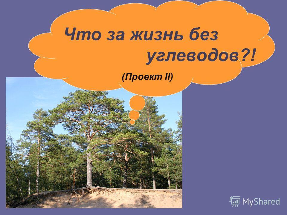 Что за жизнь без углеводов?! (Проект II)