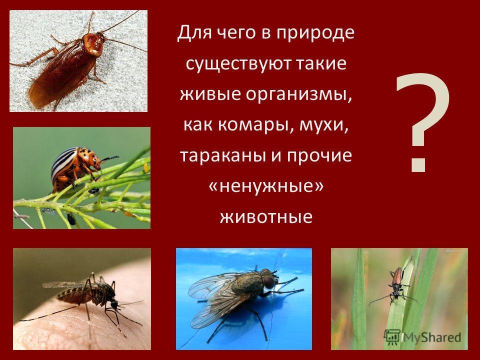 Тема исследования: «Жизнь экосистемы» Автор проекта: Горлинская Елизавета ученица 3 «Б» класса гимназии 13 г. Волгограда