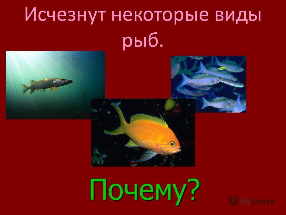 Посмотрим, что же произойдет в жизни различных экосистем ?