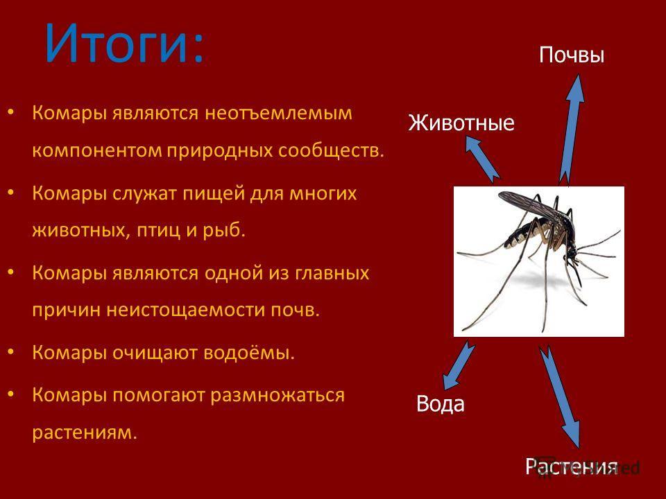 Между тем, комар является звеном, которому отведена в природе определённая роль. Их исчезновение ставит под угрозу жизнь растений и животных всех видов. Поэтому нужно научиться сосуществовать с ними с меньшим вредом друг для друга! На первый взгляд п