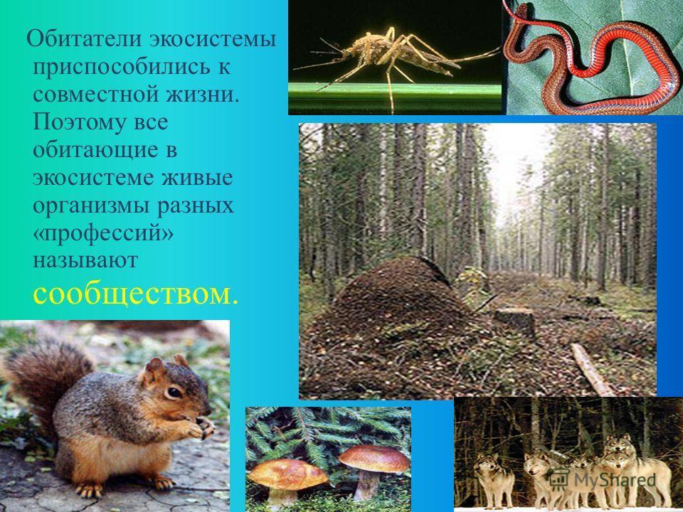 ВЫВОДЫ: В экосистеме нет ничего лишнего: всё, что в ней производится, полностью используется её обитателями. Экосистема существует без посторонней помощи как угодно долго. Обитатели экосистемы полностью приспособлены к совместной жизни.