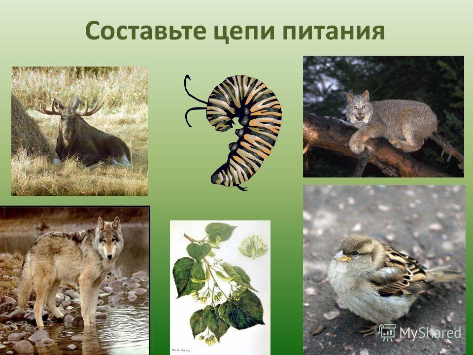 Экосистема – единство живой и неживой природы, в котором сообщество живых организмов разных «профессий» способно совместными усилиями поддерживать круговорот веществ. живой и неживой природысообществопрофессий веществ