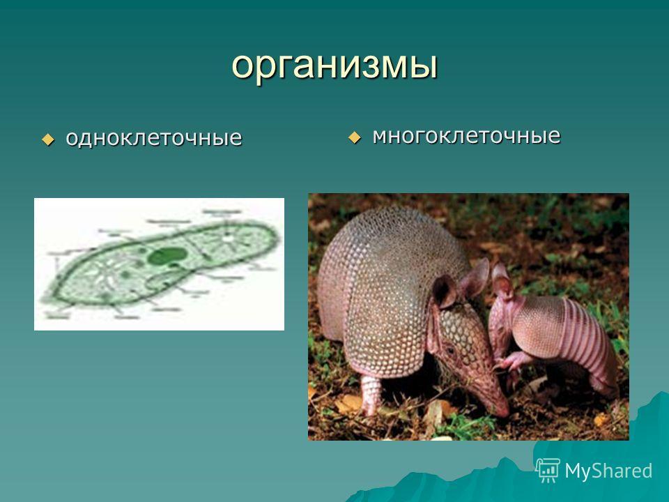 организмы многоклеточные многоклеточные одноклеточные одноклеточные