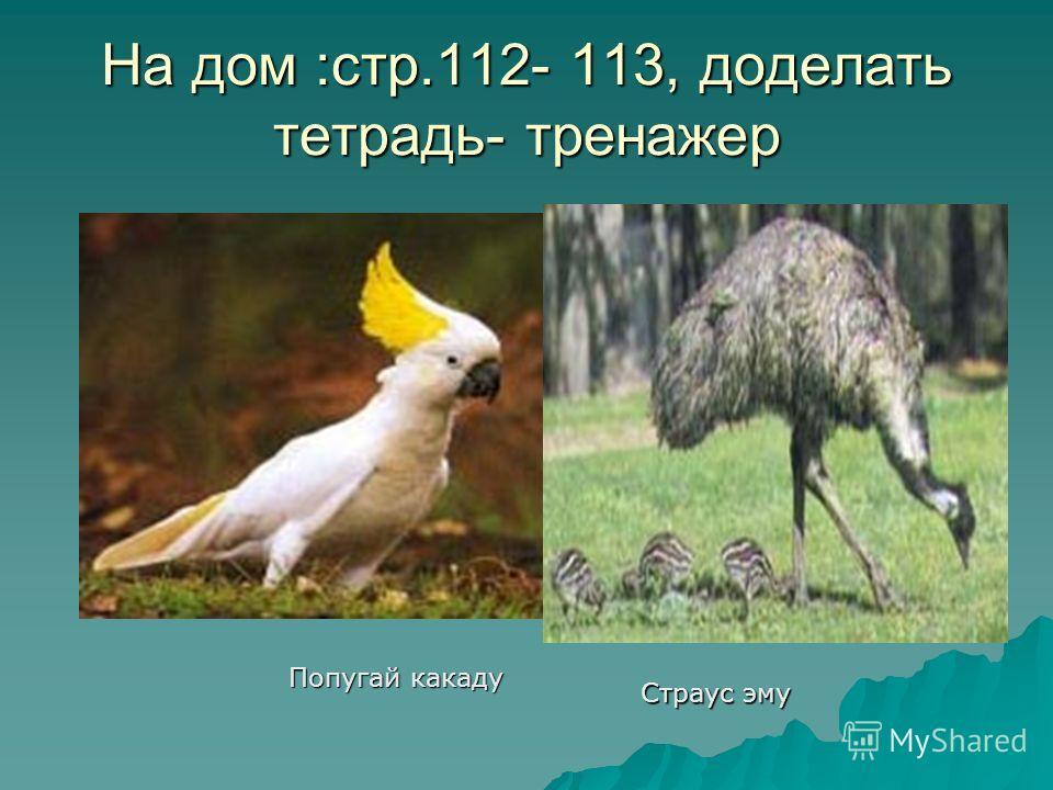 Утконос Попугай какаду Страус эму На дом :стр.112- 113, доделать тетрадь- тренажер
