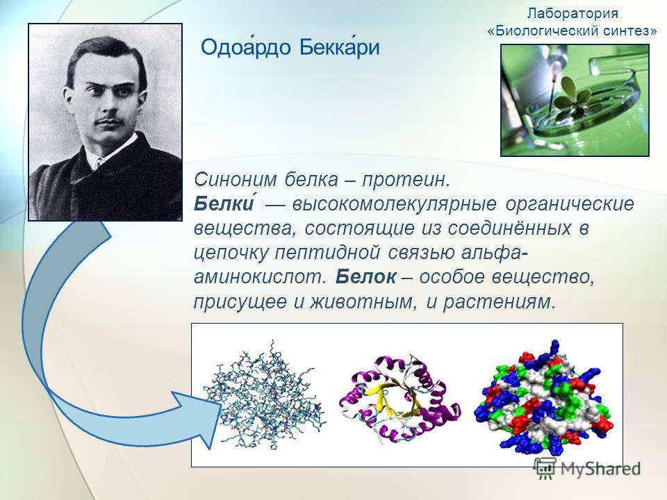 Синоним белка – протеин. Белки́ высокомолекулярные органические вещества, состоящие из соединённых в цепочку пептидной связью альфа- аминокислот. Белок – особое вещество, присущее и животным, и растениям. Одоа́рдо Бекка́ри Лаборатория «Биологический
